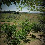 vacanze-a-penne-abruzzo-2